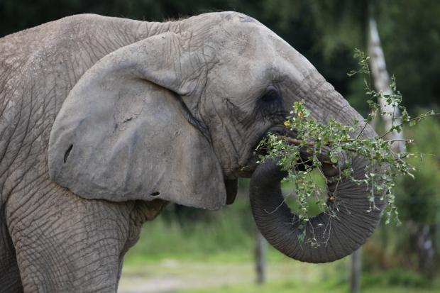 ¿Desaparecerán los grandes mamíferos?