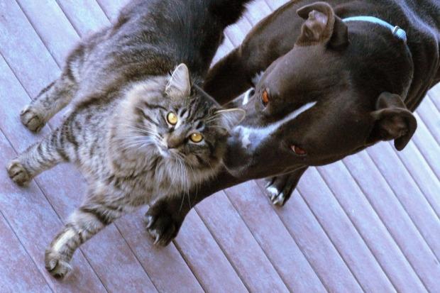 El tabaco y las mascotas